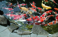 池管理・工事の画像